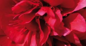 postkarte-regenblume-front